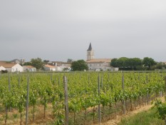 © Sunny French Property - Church steeple emerging from vineyards on Oléron Island
